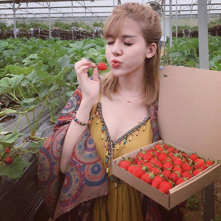 Thưởng thức vị dâu tây ngọt lịm ngay vườn khi đến du lịch Sapa