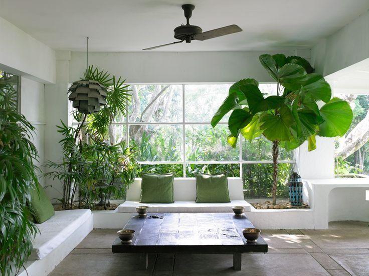 Cây cảnh phong thủy trong phòng khách nên chọn loại nào?