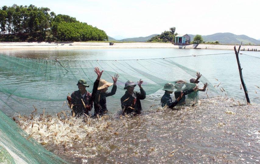Hé lộ kỹ thuật nuôi tôm nước ngọt đạt hiệu quả cao