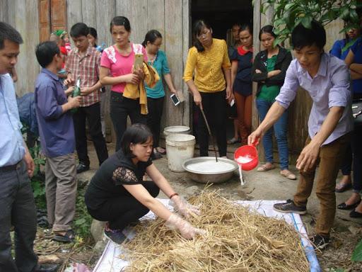 Hướng dẫn các phương pháp dự trữ và chế biến thức ăn cho trâu bò
